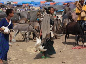 Dag 14: marktdag in Lalibela