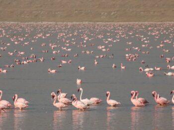 Dag 2: de 1000 flamingo lodge
